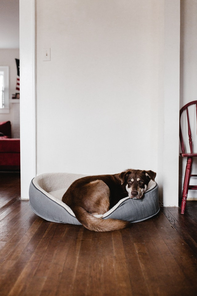 Best Big Dog Bed: What Benefits Can it Provide?